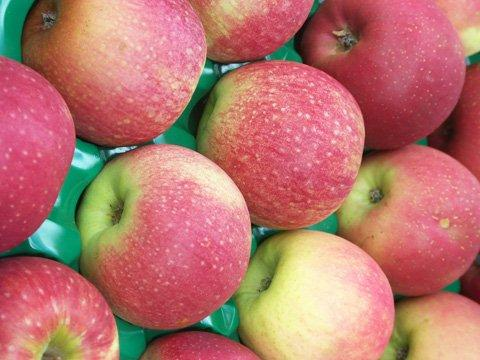 pink-lady-apples_w480