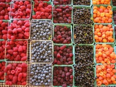 blog-berries-01