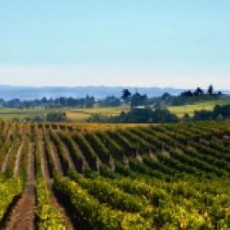 wine_country_2